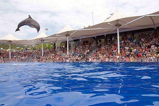 Dolphins in Marineland