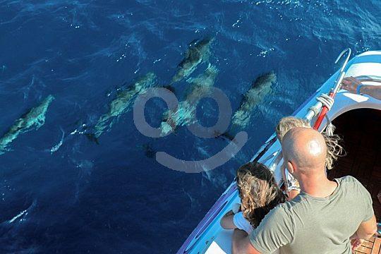 Fuerteventura dolphin boat trip