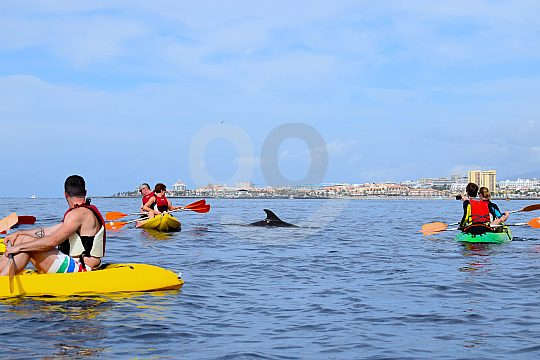 Dolphin watching with a kayak in the Canary Islands