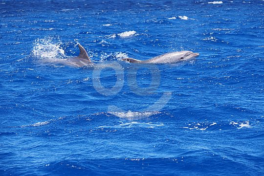 Speedboat tour and dolphins