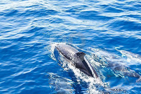 Santa Ponsa dolphin watching