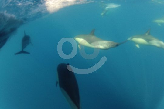 Boat trip with dolphins in the Algarve