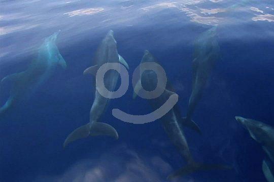 dolphins at catamaran trip Majorca