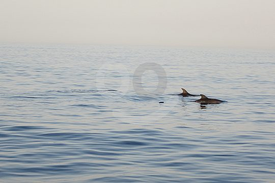 Mallorca dolphin watching
