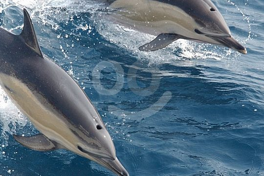 catamaran tour dolphin watching Mallorca