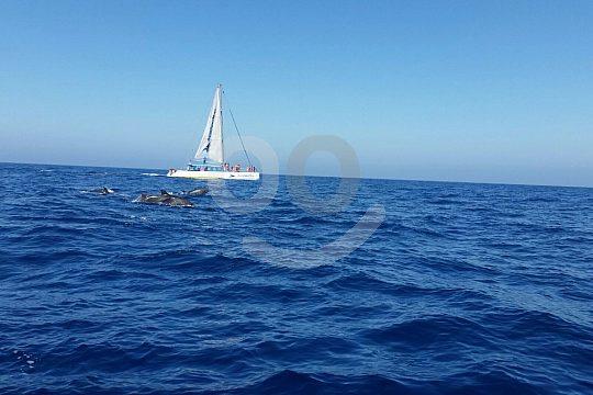 Catamaran trip in Gran Canaria