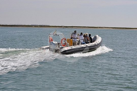 Boat trip with dolphin watching at the Algarve