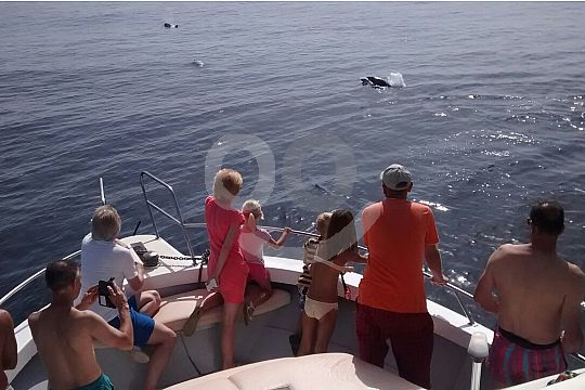 Group watching dolphins on board