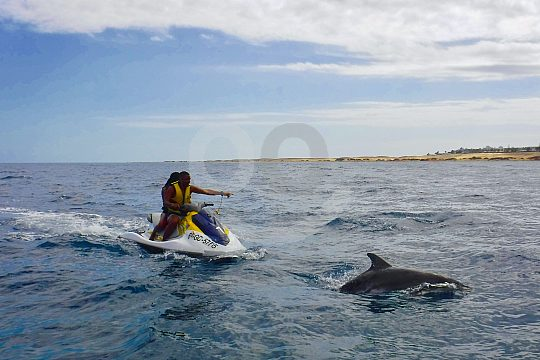 Jetski Safari Fuerteventura to the Dolphins