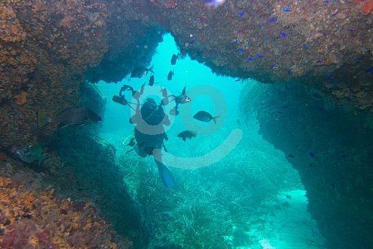 Tabarca scuba diving in Santa Pola