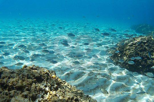 diving Tarragona fish swarm