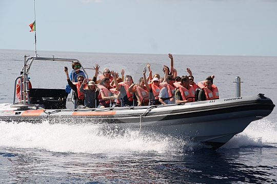 the dolphin boat trip from Funchal