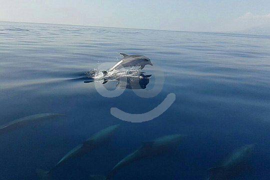 Malaga dolphin watching