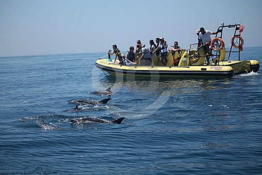 Powerboat and dolphins in the Algarve