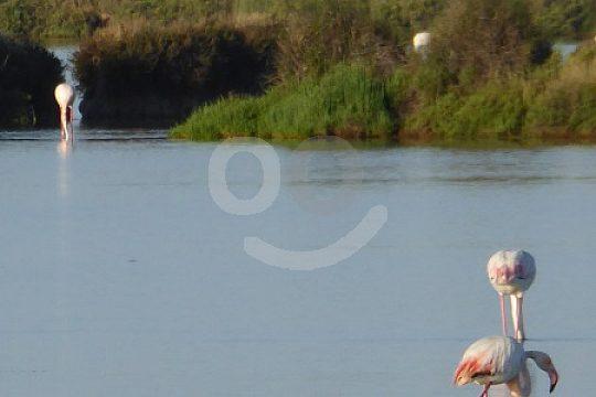 Jeep Safari with flamingos in Barrameda