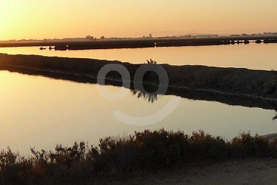lagoons at Doñana Natural Park Spain