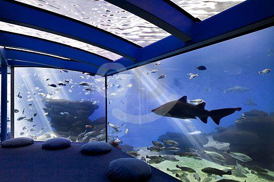 Tickets Aquarium Majorca