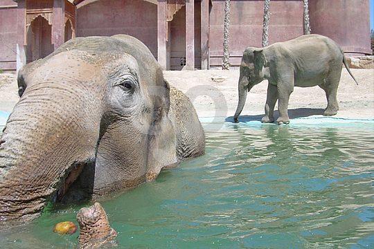 Elephants in Terra Natura Benidorm