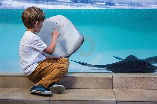 Palma Aquarium family ticket