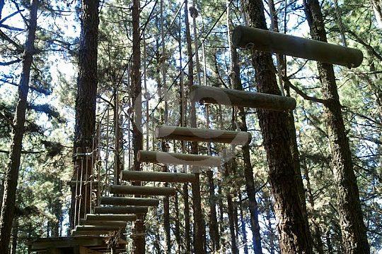 climb Forestal Park Tenerife