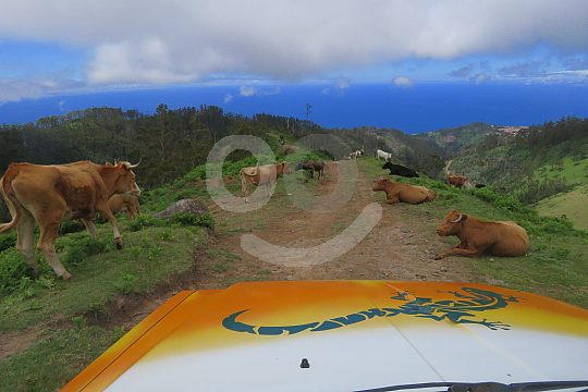 Funchal Jeep Safari