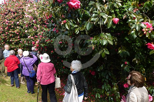 Group Tour in the Pontevedra botanical garden