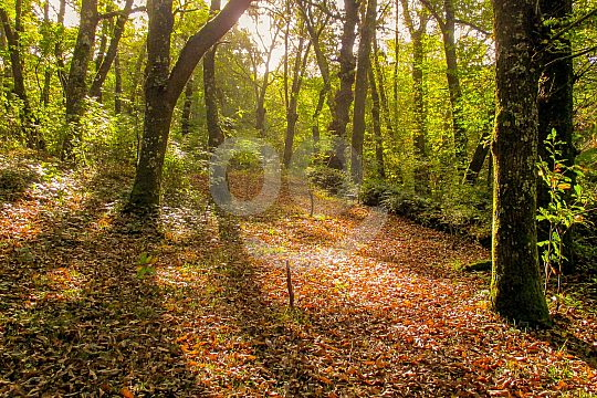 discover galicia's beautiful forests