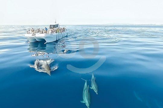 Delfine vor dem Boot