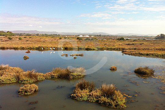 Ria Formosa Wetland