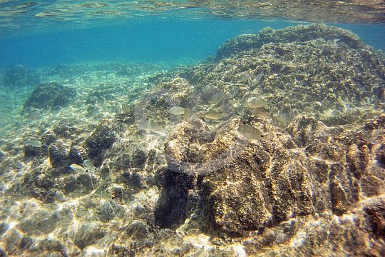 the best Playa Blanca snorkelling tour