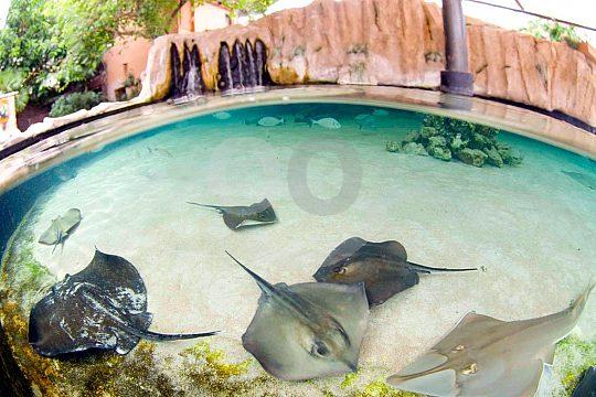 ray pool in Marineland Mallorca
