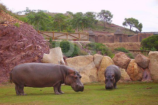Zoo in Murcia