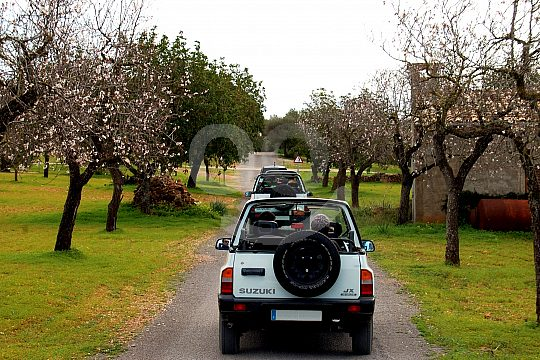 Spring in Majorca jeep tour