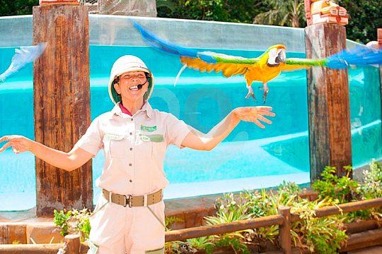 Papageien-Show auf Teneriffa