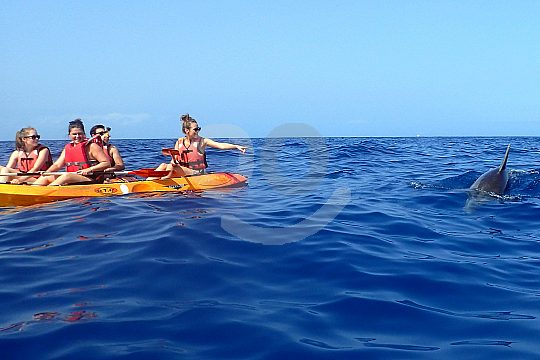 Dolphins on a kayak trip to Tenerife