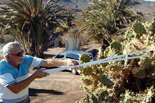 Ernte Tapas-Tour Fuerteventura