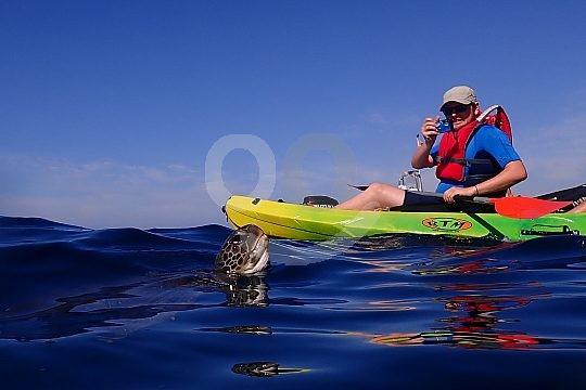 Turtles swim beside kayak on Tenerife