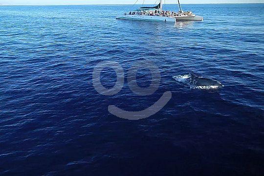 Cala Ratjada dolphins Mallorca