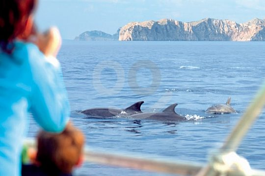 dolphin catamaran tour