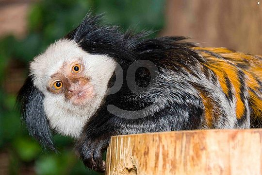 monkey in the marine zoo Mallorca