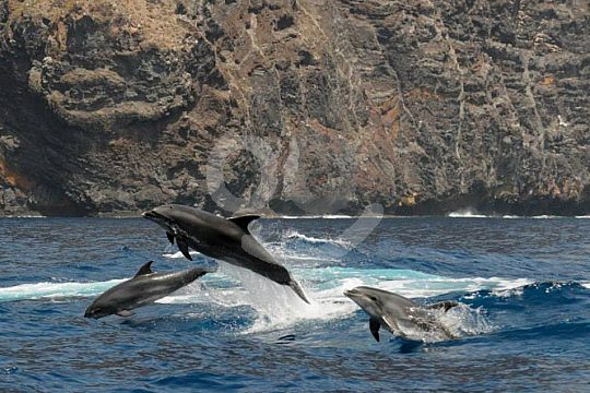 in Tenerife on dolphin watching during sailing