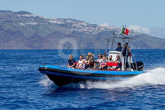Speedboat in Madeira