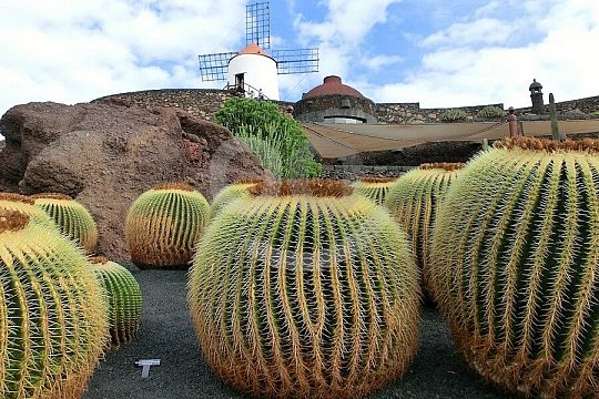 Round trip of the island of Lanzarote with private guide