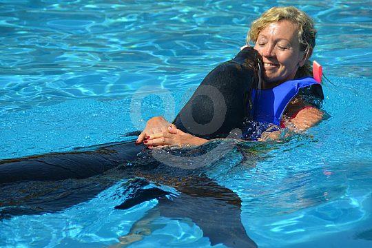 swim with sea lions in Rancho Texas Park Lanzarote