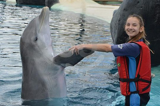 swim with dolphins in Rancho Texas Park Lanzarote
