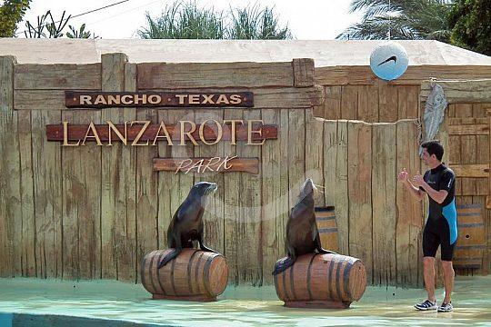 sea lion show in Rancho Texas Park Lanzarote