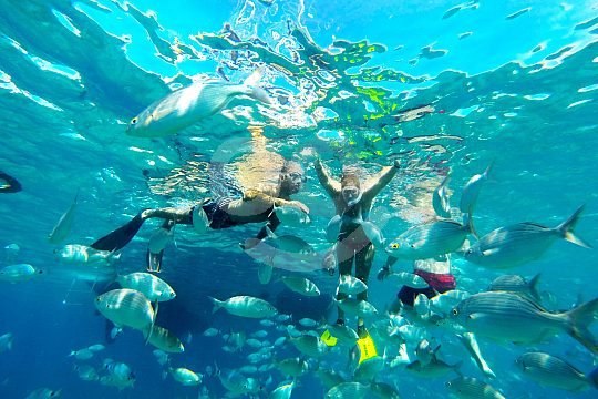 Tauchen zwischen Fischen