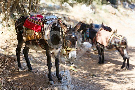 Local village life on Crete