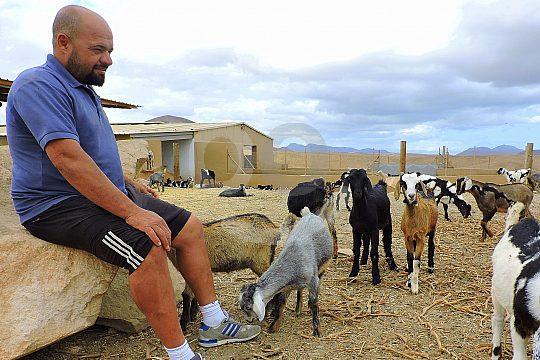 Ziegen mit Besitzer