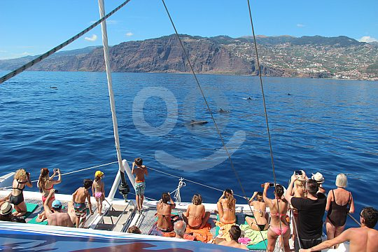 Catamaran trip on Madeira